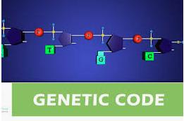 GENETIC CODE & REGULATION Objective Questions